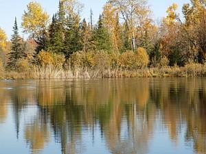 étang reflets arbres