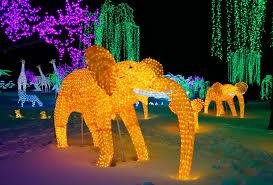 illumi éléphant