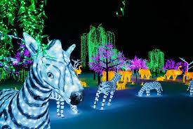illumi zebre